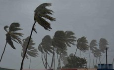 Palm trees sway in the strong winds of the hurricane