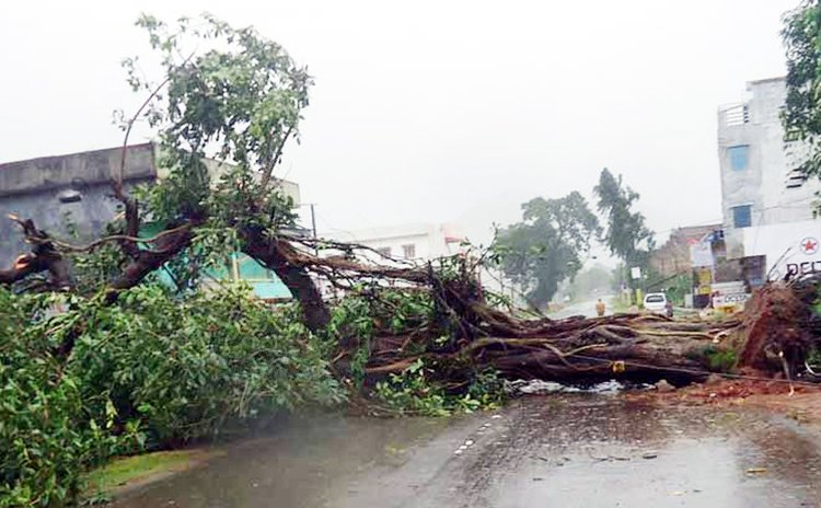 Clyclone Hudhud down trees in Andhra Pradesh