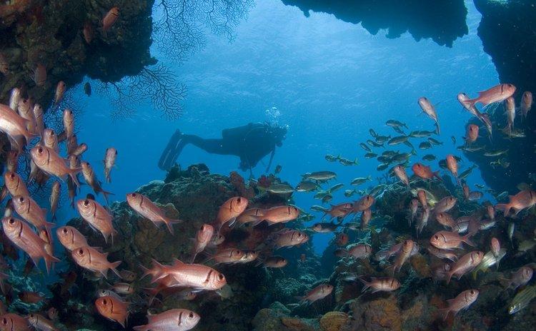 Dominica Under-water scene-(Discover Dominica Photo)