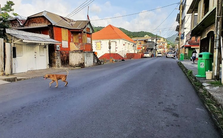 A dog crosses an empty Independence Street, Roseau during the curfew
