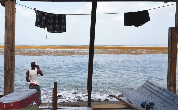 Man takes photo os Sargassum seaweed at Pottersville