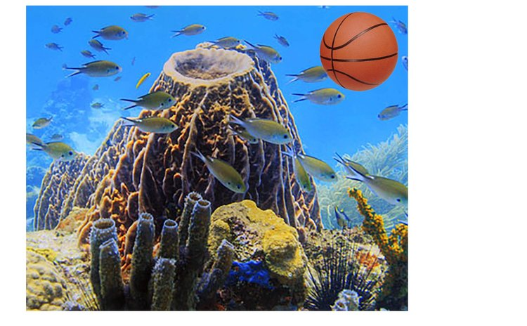 Soufriere-Scott's Head area is well known for magnificent underwater life