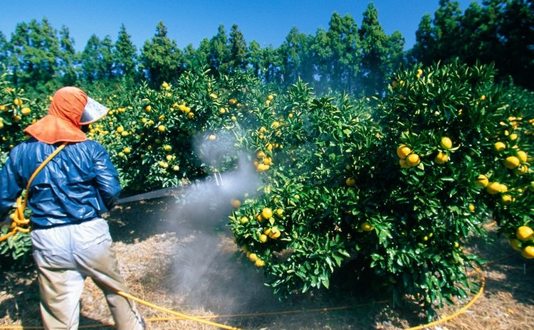 Man spraying pesticide