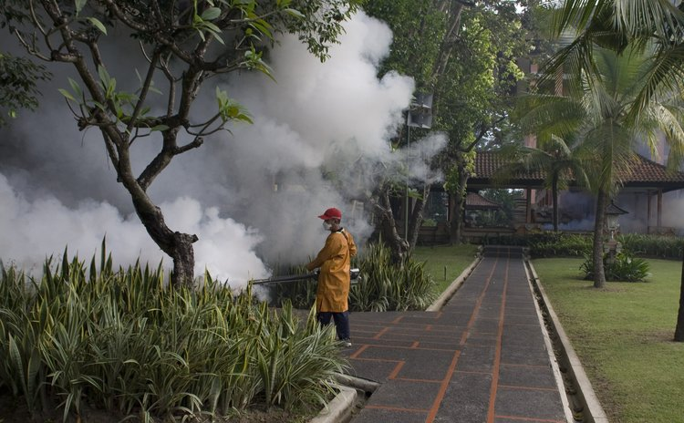 Regular fogging to prevent dengue and other diseases transmitted by mosquitoes in Bali, Indonesia.(WHO photo)